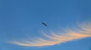 Πετώντας seagull ενάντια στο μπλε ουρανό Στοκ εικόνες με δικαίωμα ελεύθερης χρήσης