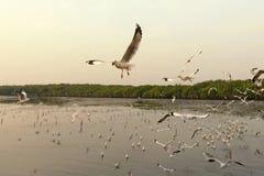 Πετώντας seagull και ηλιοβασίλεμα Στοκ φωτογραφία με δικαίωμα ελεύθερης χρήσης