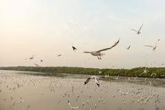 Πετώντας seagull και ηλιοβασίλεμα Στοκ φωτογραφίες με δικαίωμα ελεύθερης χρήσης