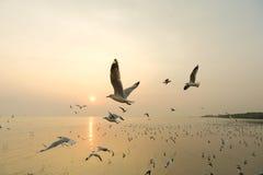 Πετώντας seagull και ηλιοβασίλεμα Στοκ Φωτογραφία