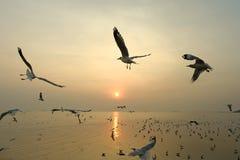 Πετώντας seagull και ηλιοβασίλεμα Στοκ Εικόνες