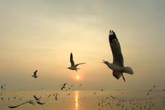 Πετώντας seagull και ηλιοβασίλεμα Στοκ Φωτογραφίες