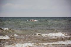 Πετώντας seagull πέρα από τη θάλασσα Στοκ Φωτογραφίες