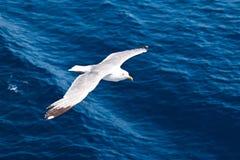 πετώντας seagull Στοκ φωτογραφία με δικαίωμα ελεύθερης χρήσης