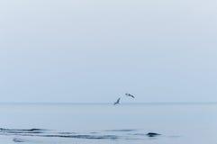 Πετώντας seagulls πέρα από μια χειμερινή θάλασσα, μπλε τονισμένη εικόνα Στοκ Φωτογραφία