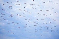 πετώντας seagulls πτήσης Στοκ Φωτογραφία