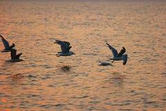 Πετώντας Seagulls στη μύγα ηλιοβασιλέματος μακριά πέρα από την επιφάνεια θάλασσας Στοκ Εικόνες