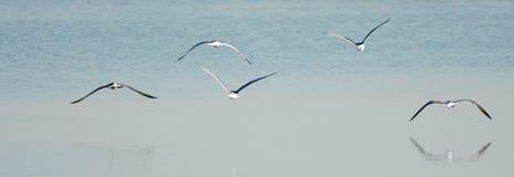 Πετώντας seagulls Στοκ εικόνες με δικαίωμα ελεύθερης χρήσης