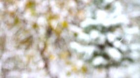 Πετώντας snowflakes στο δέντρο πεύκων απόθεμα βίντεο