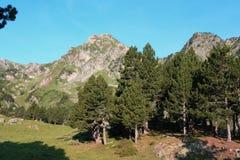 Πεύκα βουνών στα Πυρηναία Στοκ εικόνα με δικαίωμα ελεύθερης χρήσης