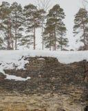 Πεύκα που αυξάνονται σε έναν απότομο βράχο ασβεστόλιθων Στοκ φωτογραφίες με δικαίωμα ελεύθερης χρήσης