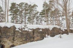 Πεύκα που αυξάνονται σε έναν απότομο βράχο ασβεστόλιθων Στοκ Εικόνες