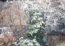 Πεύκα στη χιονοθύελλα Στοκ Εικόνες