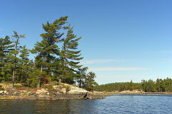 Πεύκα στο γαλλικό ποταμό Στοκ Εικόνα