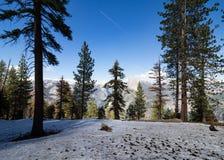 Πεύκα Ponderosa, χιόνι και μισός θόλος σε Yosemite, αεροπλάνο skytrail Στοκ Εικόνες