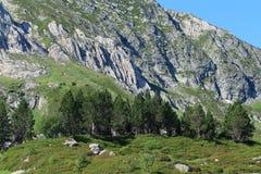 Πεύκο βουνών στα Πυρηναία Στοκ φωτογραφία με δικαίωμα ελεύθερης χρήσης