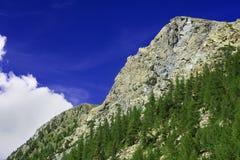 πεύκο βουνών Στοκ εικόνα με δικαίωμα ελεύθερης χρήσης