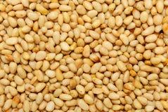 πεύκο καρυδιών σιταριών στοκ εικόνες με δικαίωμα ελεύθερης χρήσης