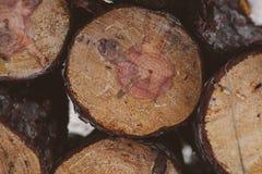 πεύκο κούτσουρων ανασκό&p Βιομηχανία ξυλείας Σύσταση και υπόβαθρο κορμών δέντρων για τους σχεδιαστές Το πεύκο συνδέεται το χειμερ Στοκ φωτογραφίες με δικαίωμα ελεύθερης χρήσης