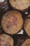 πεύκο κούτσουρων ανασκό&p Βιομηχανία ξυλείας Σύσταση και υπόβαθρο κορμών δέντρων για τους σχεδιαστές Το πεύκο συνδέεται το χειμερ Στοκ εικόνες με δικαίωμα ελεύθερης χρήσης