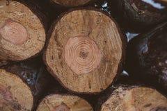 πεύκο κούτσουρων ανασκό&p Βιομηχανία ξυλείας Σύσταση και υπόβαθρο κορμών δέντρων για τους σχεδιαστές Το πεύκο συνδέεται το χειμερ Στοκ Φωτογραφία