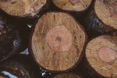 πεύκο κούτσουρων ανασκό&p Βιομηχανία ξυλείας Σύσταση και υπόβαθρο κορμών δέντρων για τους σχεδιαστές Το πεύκο συνδέεται το χειμερ Στοκ φωτογραφία με δικαίωμα ελεύθερης χρήσης