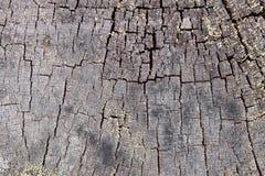πεύκο κούτσουρων προσώπου τελών ανασκόπησης σάπιο Στοκ φωτογραφία με δικαίωμα ελεύθερης χρήσης