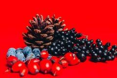 Πεύκο, κώνος, Χριστούγεννα Στοκ Εικόνες