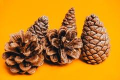 Πεύκο, κώνος, Χριστούγεννα Στοκ εικόνες με δικαίωμα ελεύθερης χρήσης