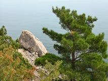 Πεύκο πέρα από τη Μαύρη Θάλασσα Φθινόπωρο Κριμαία Στοκ Εικόνα
