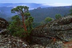 Πεύκο σε έναν απότομο βράχο Στοκ εικόνα με δικαίωμα ελεύθερης χρήσης