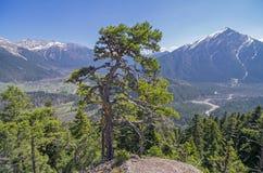 Πεύκο στην κορυφή απότομων βράχων. Καύκασος, Ρωσία. Στοκ Φωτογραφίες