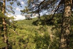 Πεύκο στο βουνό Στοκ φωτογραφίες με δικαίωμα ελεύθερης χρήσης