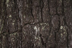 Πεύκο του υποβάθρου φλοιών Στοκ Εικόνες