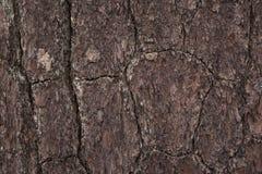 Πεύκο του υποβάθρου φλοιών Στοκ Εικόνα