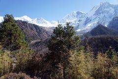 Πεύκο Himalayan στο υπόβαθρο των χιονωδών αιχμών Στοκ Φωτογραφία
