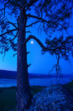 Πεύκο Ponderosa επάνω από το επαρχιακό πάρκο Fintry Στοκ εικόνες με δικαίωμα ελεύθερης χρήσης