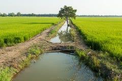 Πεδία ρυζιού στοκ φωτογραφίες