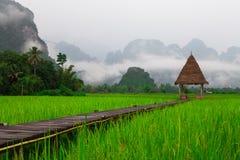 Πεδία ρυζιού στοκ εικόνα