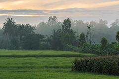 Πεδία ρυζιού στοκ εικόνες