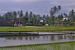 Πεδία ρυζιού στοκ φωτογραφία με δικαίωμα ελεύθερης χρήσης