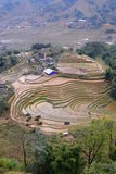 Πεδία ρυζιού Sa PA Βιετνάμ στοκ εικόνες