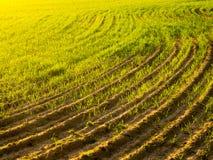 πεδίο γεωργίας Στοκ φωτογραφίες με δικαίωμα ελεύθερης χρήσης