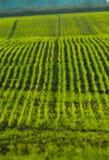 πεδίο γεωργίας Στοκ Φωτογραφίες