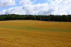 πεδίο γεωργίας Στοκ εικόνες με δικαίωμα ελεύθερης χρήσης