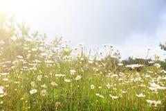 πεδίο ηλιόλουστο Στοκ εικόνες με δικαίωμα ελεύθερης χρήσης