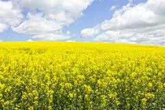 Πεδίο κίτρινου Στοκ Εικόνες