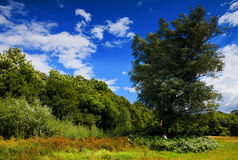 Πεδίο και δέντρο Στοκ Φωτογραφία