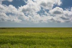 Πεδίο και μπλε ουρανός ρυζιού Στοκ Φωτογραφία