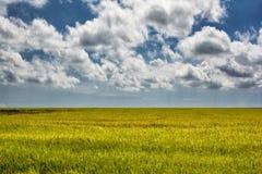 Πεδίο και μπλε ουρανός ρυζιού Στοκ φωτογραφία με δικαίωμα ελεύθερης χρήσης
